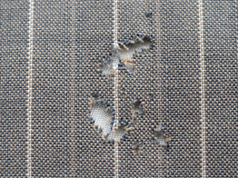 Carpet beetle damage